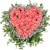 꽃상자 안개핑크사랑