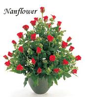 빨강장미화병꽃