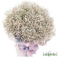 화이트 안개꽃다발