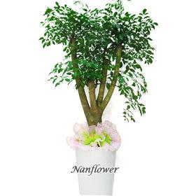 행복나무 특